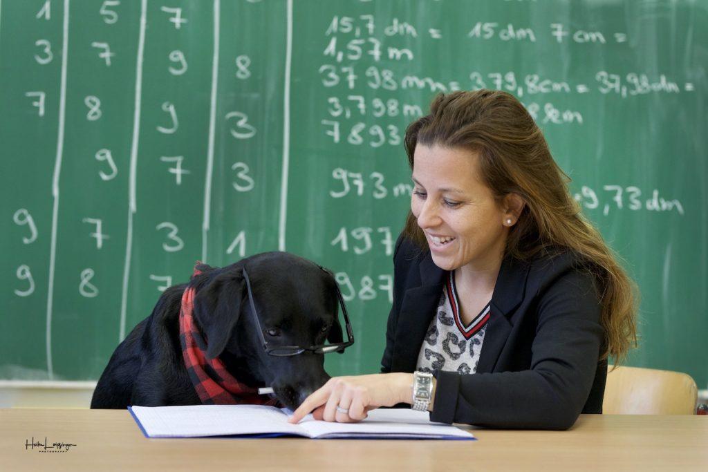 Tierfotografie Hund Schule