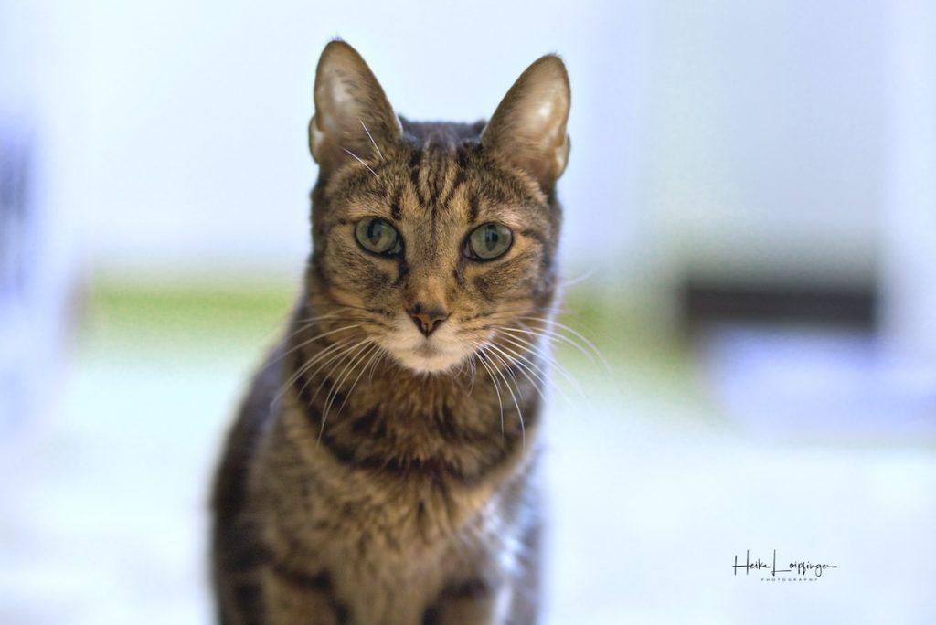 Tierfotografie-Katze-Schwieberdingen
