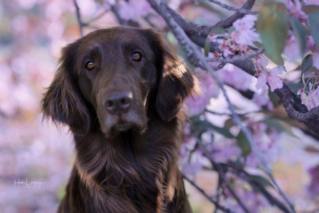 Tierfotografie Kirschblüten Illingen