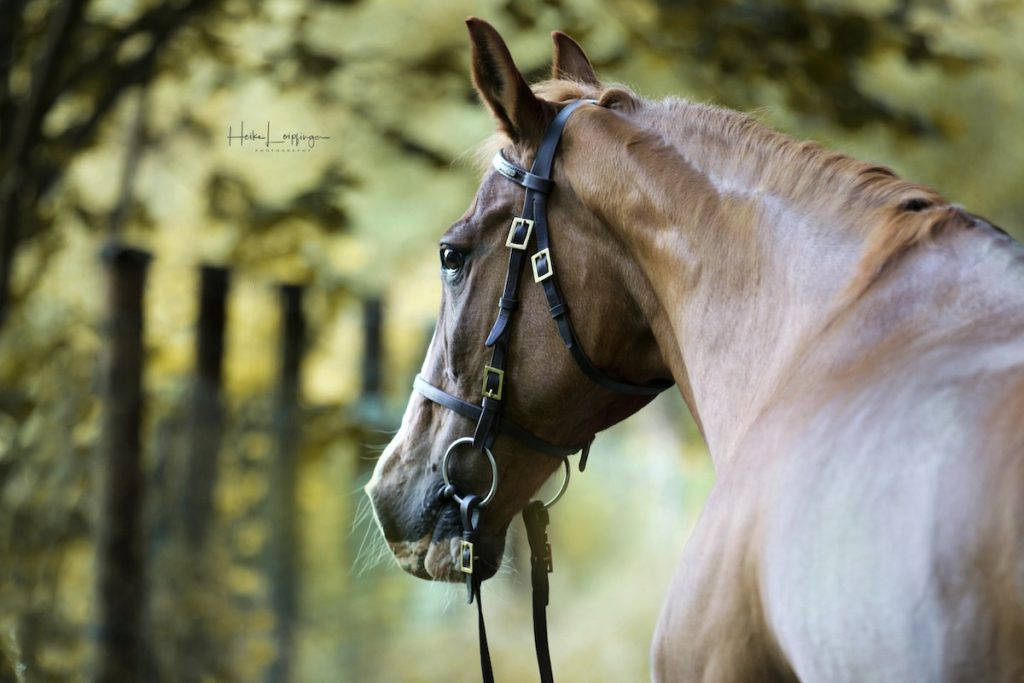 Tierfotografie-Pferd-Bietigheim