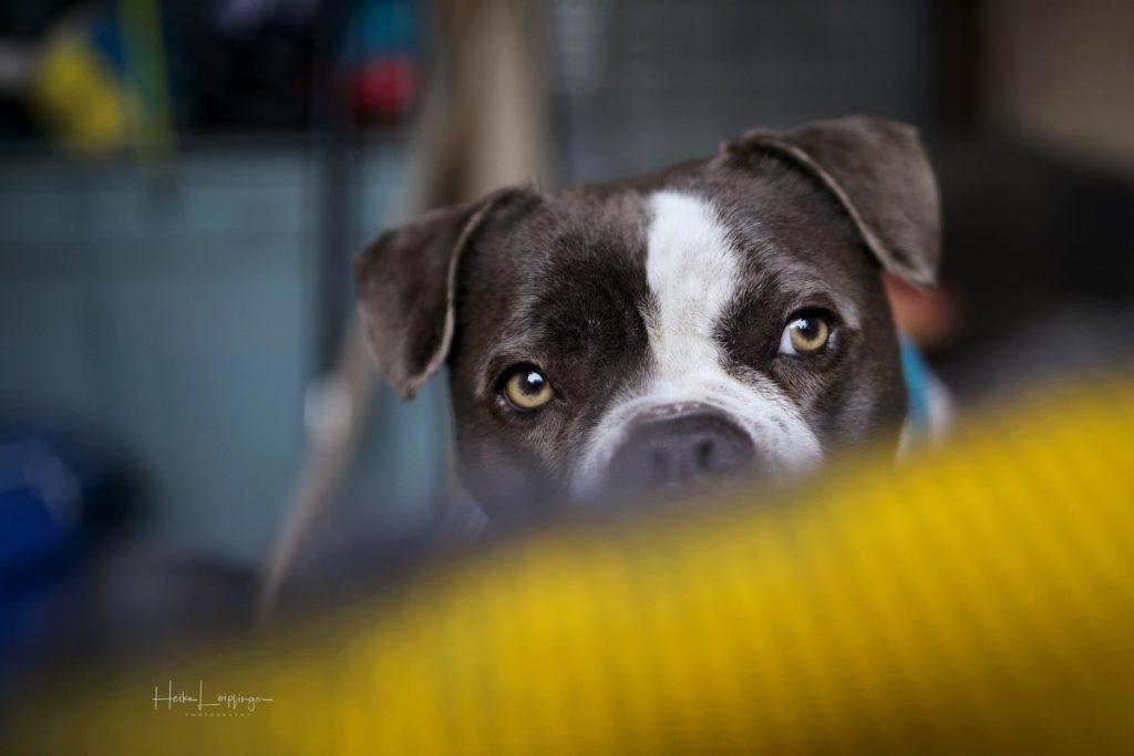 Tierfotografie-Hund-Flacht