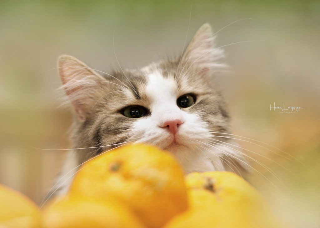 Tierfotografie-Katze-Markgröningen