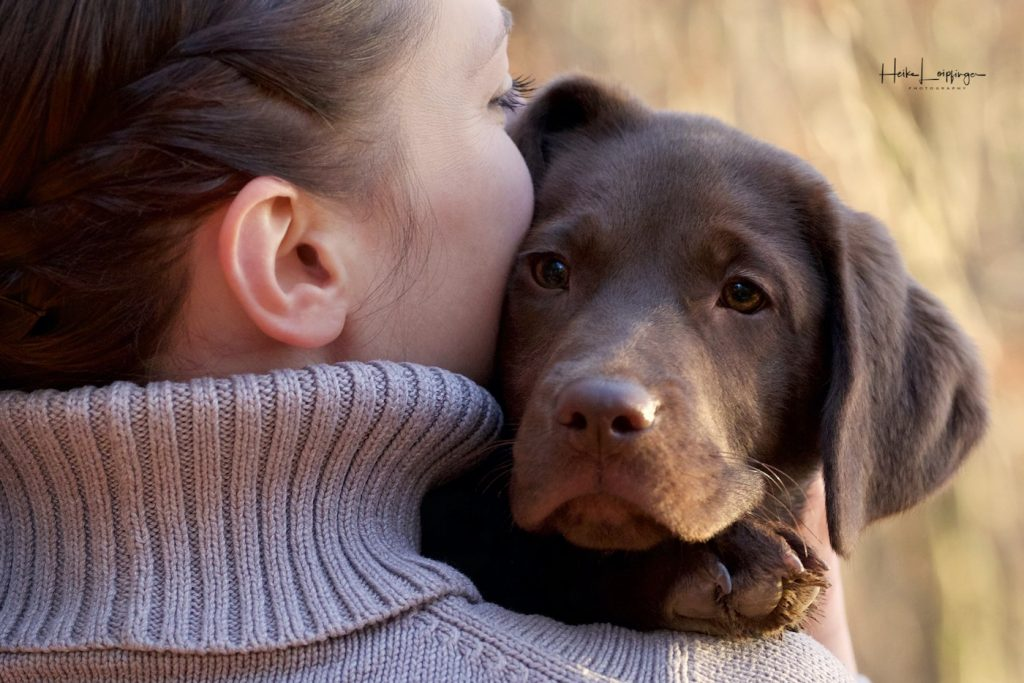 Tierfotografie-Labrador-Welpe