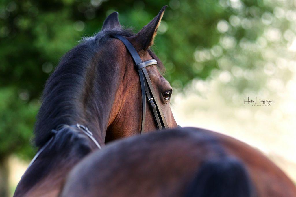 Tierfotografie-Pferd-Ludwigsburg