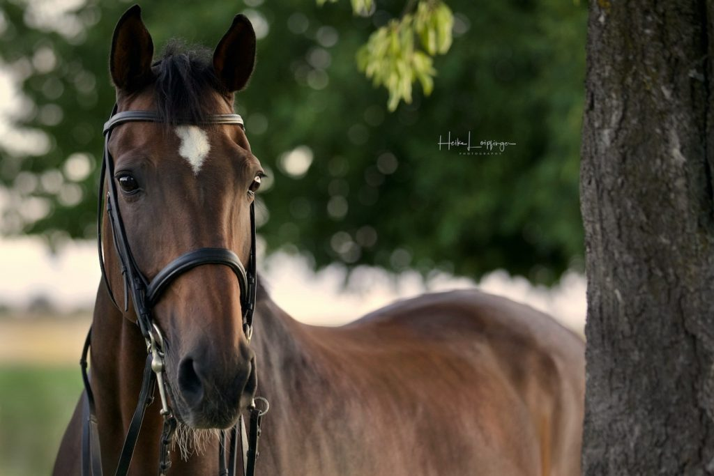 Tierfotografie-Pferd-Münchingen